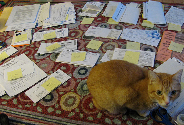 Lot's of papers on the floor and a cat looking up.