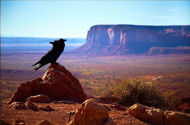 Desert. A bird standing atop a stone.